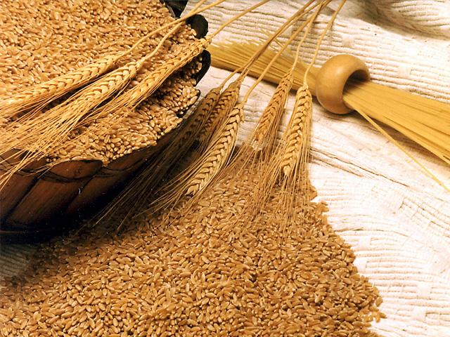 якість насіння
