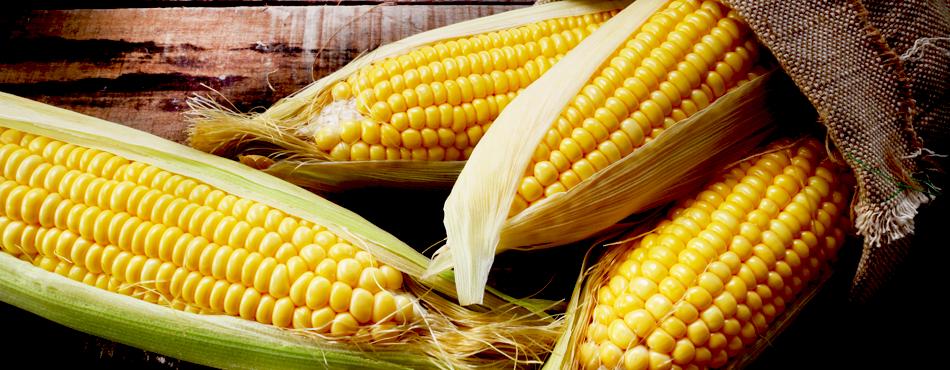 corn-cover