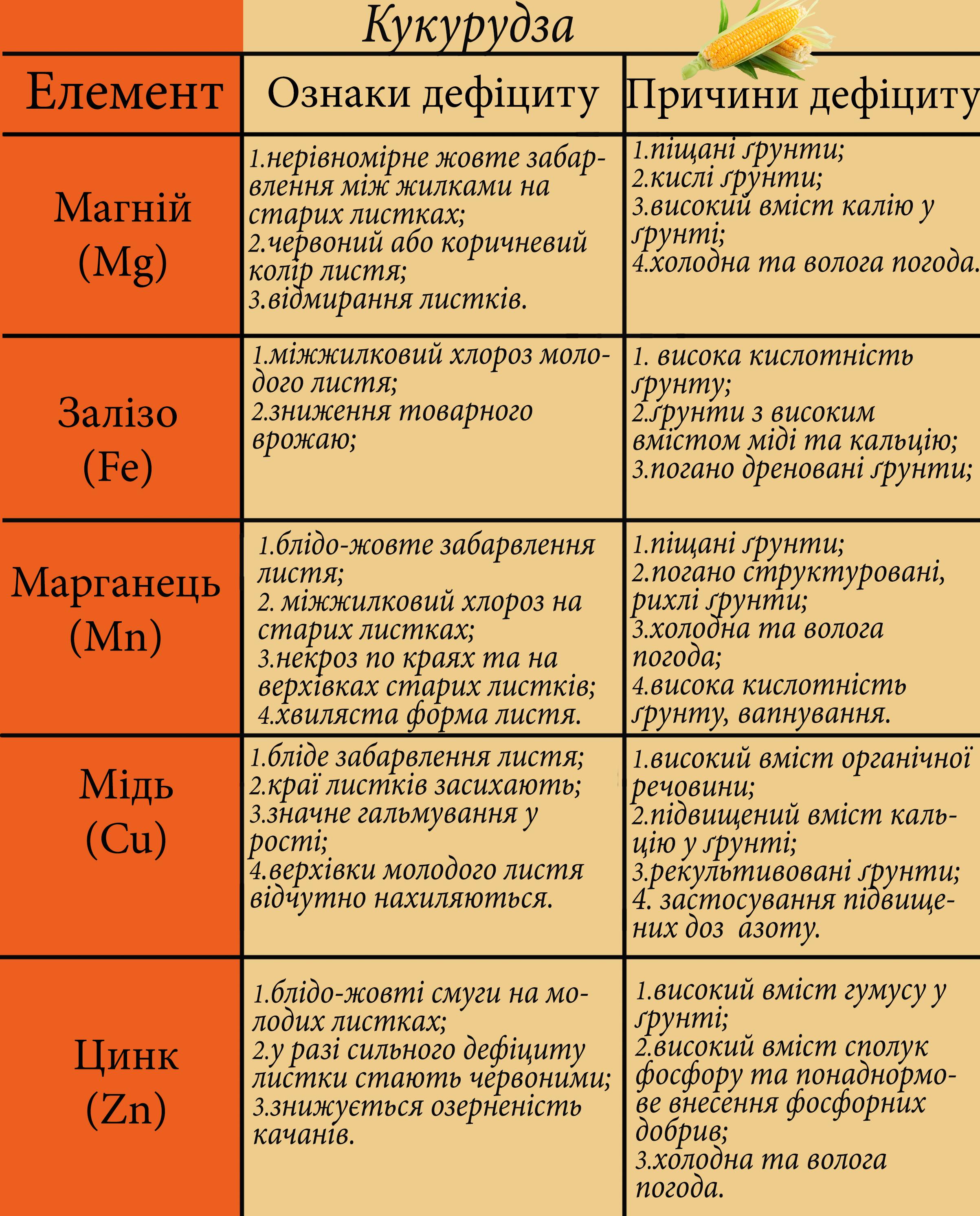 елементи на культурах - кукурудза