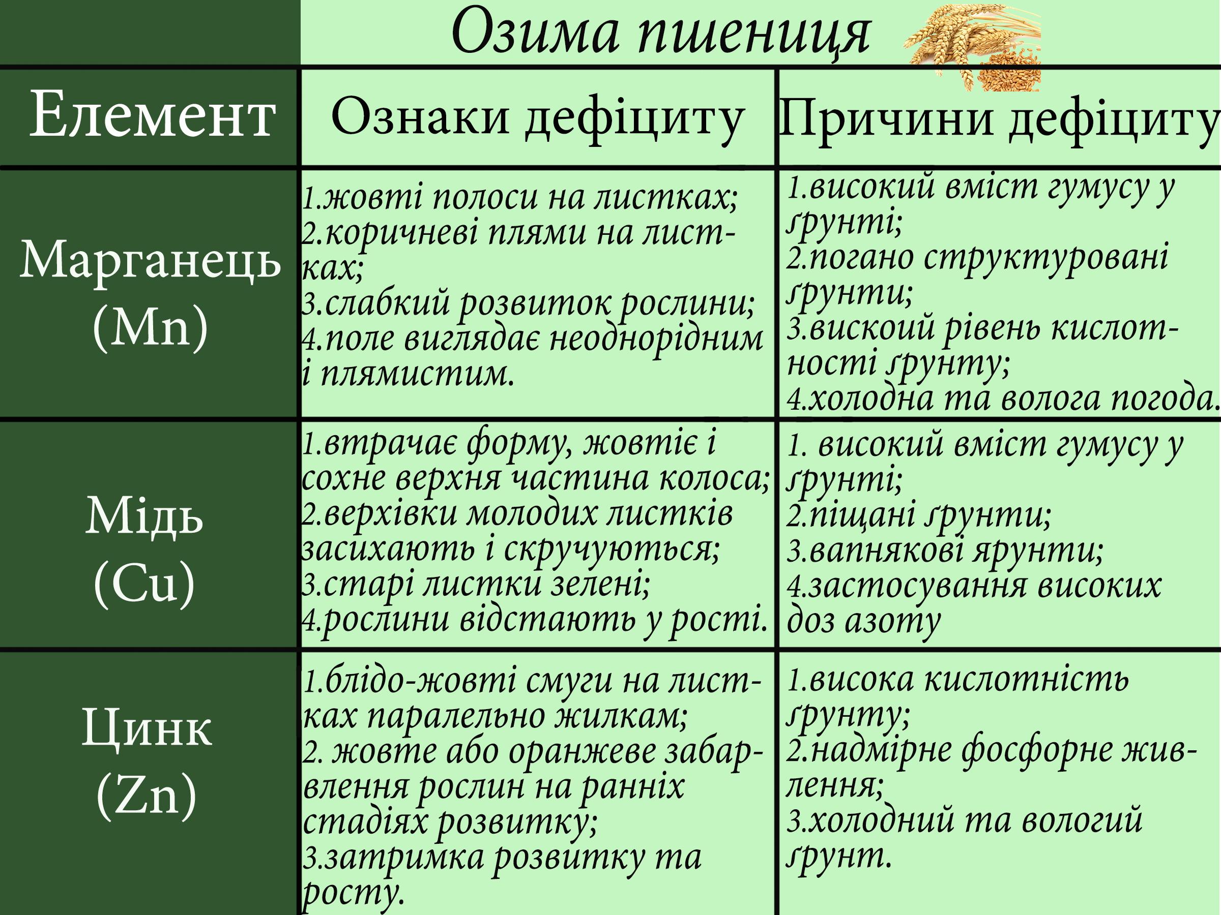 елементи на культурах - озима пшениця