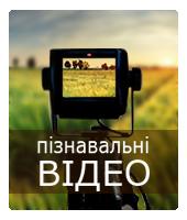 Пізнавальні відео